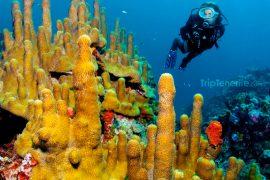 Maravilloso fondo del mar