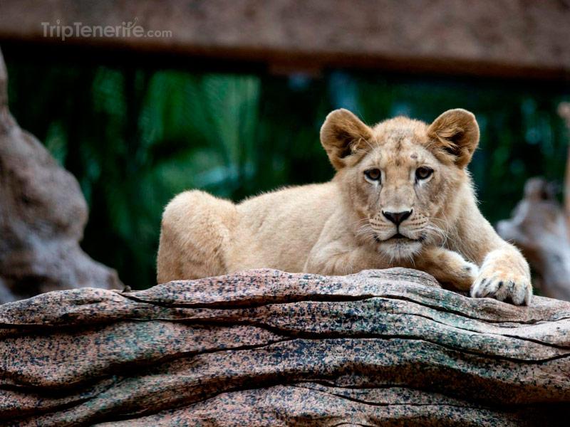 bebe leon