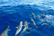 Familia de delfines