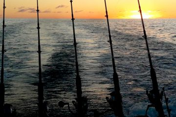 No Limit - Pesca en Tenerife